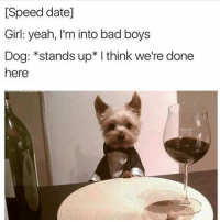 Bad Boys, Memes, and 🤖: [Speed date]  Girl: yeah, I'm into bad boys  Dog: *stands up* I think we'redone  here Ok fine ONE dog meme smh 🙈(@shitheadsteve)
