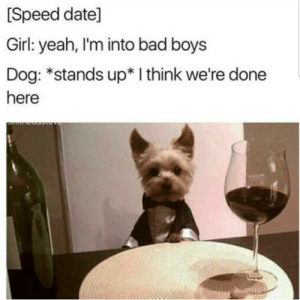 Bad, Bad Boys, and Yeah: [Speed date]  Girl: yeah, I'm into bad boys  Dog: *stands up* I think we're done  here Check please