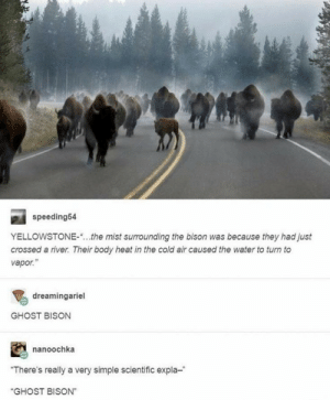 "GHOST BISON: speeding54  YELLOWSTONE-  the mist surrounding the bison was because they had just  crossed a river. Their body heat in the cold air caused the water to turn to  vapor.""  dreamingariel  GHOST BISON  nanoochka  ""There's really a very simple scientific expla-  ""GHOST BISON"" GHOST BISON"
