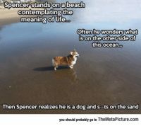 Corgi, Life, and Tumblr: Spencer stands on a beach  contemplating the  meaning of life...  Often he wonders  Often hewonderswhat  son'the other 'Side o  this ocean...  of  Ce  Then Spencer realizes he is a dog and sts on the sand  you should probably go to TheMetaPicture.com epicjohndoe:  Spencer The Philosopher Corgi