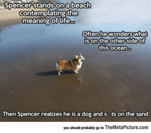 epicjohndoe:  Spencer The Philosopher Corgi: Spencer stands on a beach  contemplating the  meaning of life...  Often he wonders  Often hewonderswhat  son'the other 'Side o  this ocean...  of  Ce  Then Spencer realizes he is a dog and sts on the sand  you should probably go to TheMetaPicture.com epicjohndoe:  Spencer The Philosopher Corgi