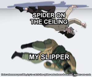 At your sole risk: SPIDER ON  THE CEILING  MY SLIPPER  Note: whenever possible, try to catch the spider and release it outside Spiders are cool. At your sole risk