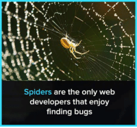 web: Spiders are the only web  developers that enjoy  finding bugs