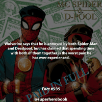 Would you spend time with the both of them? - marvel superhero facts marvelfacts steverogers rocketracoon spiderman marveluniverse anime marvelstudios xmen thor nova avengers comics mcu marvelart marvelcomics teamcap civilwar teamironman ironman avengers spiderman chrisevans captainamerica spidermanhomecoming stanlee logan wolverine xmen ===================================: SPIEE  D-POOL  Wolverine says that he is annoyed by both Spider-Man  and Deadpool, but has claimed that spending time  with both of them together is the worst pain he  has ever experienced.  Fact #935  @superherobook Would you spend time with the both of them? - marvel superhero facts marvelfacts steverogers rocketracoon spiderman marveluniverse anime marvelstudios xmen thor nova avengers comics mcu marvelart marvelcomics teamcap civilwar teamironman ironman avengers spiderman chrisevans captainamerica spidermanhomecoming stanlee logan wolverine xmen ===================================