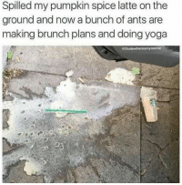 pumpkin spice latte: Spilled my pumpkin spice latte on the  ground and now a bunch of ants are  making brunch plans and doing yoga  Dudewheresmymeme