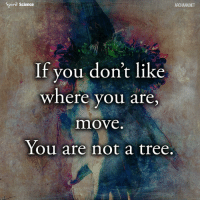 Energy, Memes, and Quotes: Spiril Science  ARCHANN NET  If vou don't like  where you are  move  You are not a tree, Share with someone who needs to hear this right now. Art by @archannair . . . . microfiction words wordsofwisdom wordporn wordgasm thegoodquote quoteoftheday poem quotes tales stories inspirationalquotes goodquotes goodvibes spilledlink goodposts thoughts typewriters microtale motivationalquotes soul souls blessings affirmations positiveaffirmations energy diet health