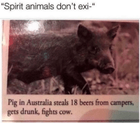 "@pms is funny AF: ""Spirit animals don't exi-""  Pig in Australia steals 18 beers from campers  gets drunk, fights cow. @pms is funny AF"