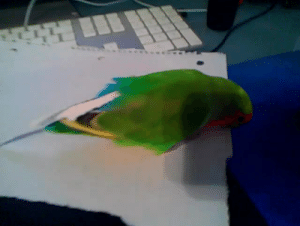 spontaneouslydyingdragons:  thenimbus:  amish-mafia-jimmies-overlord:  kordova:  my bird shredding some paper  The Ordon Village music in the background somehow made this even better.  This is so fucking cute holy shit  Hes making himself little feather extensions omg : spontaneouslydyingdragons:  thenimbus:  amish-mafia-jimmies-overlord:  kordova:  my bird shredding some paper  The Ordon Village music in the background somehow made this even better.  This is so fucking cute holy shit  Hes making himself little feather extensions omg