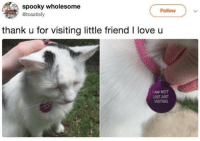 Love, Lost, and Spooky: spooky wholesome  Follow  @tosatisfy  thank u for visiting little friend I love u  IAM NOT  LOST JUST  VISITING