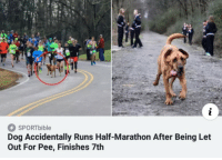 Run, Doggo, and Dog: SPORTbible  Dog Accidentally Runs Half-Marathon After Being Let  Out For Pee, Finishes 7th Run doggo run