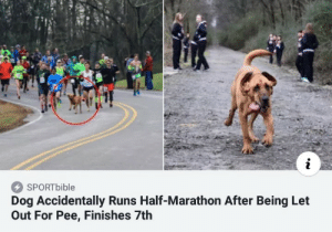 Let Out: SPORTbible  Dog Accidentally Runs Half-Marathon After Being Let  Out For Pee, Finishes 7th