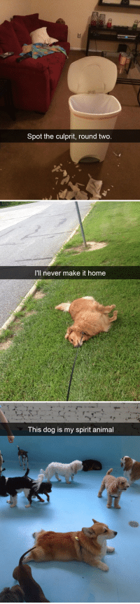 Target, Tumblr, and Animal: Spot the culprit, round two   'll never make it home   This dog is my spirit animal animalsnaps:Dog snaps