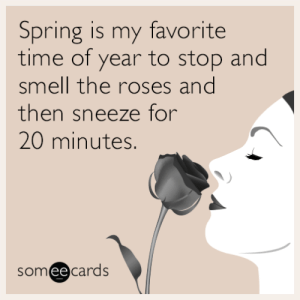 Smell, Tumblr, and Blog: Spring is my favorite  time of year to stop and  smell the roses and  then sneeze for  20 minutes.  someecards memehumor:  Spring is my favorite time of year to stop and smell the roses and then sneeze for 20 minutes.