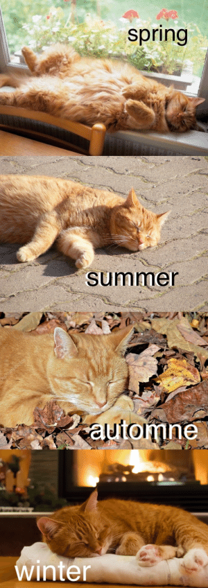 catsuggest:  moods for all four seasons: spring   summer   tomne   winte catsuggest:  moods for all four seasons