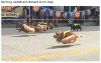 Usa, Dog, and Hot Dog: Sprinting dachshunds dressed as hot dog:s  USA  HE WIENERS  arity