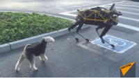 "<p><a href=""http://scifiseries.tumblr.com/post/162183062804/real-dog-meets-boston-dynamics-robot-dog-for"" class=""tumblr_blog"">scifiseries</a>:</p>  <blockquote><p>""Real Dog Meets Boston Dynamics Robot Dog for First Time""</p></blockquote>: SPUTniK <p><a href=""http://scifiseries.tumblr.com/post/162183062804/real-dog-meets-boston-dynamics-robot-dog-for"" class=""tumblr_blog"">scifiseries</a>:</p>  <blockquote><p>""Real Dog Meets Boston Dynamics Robot Dog for First Time""</p></blockquote>"