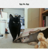 srsfunny:  They Are Always Plotting: Spy Vs. Spy  ZZA PASTA SUB srsfunny:  They Are Always Plotting