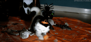 surfcontra:  disgustinganimals:  youthxcrew69:  THIS IS A CAT IN A HALLOWEEN COSTUME PLAYING WITH A TINY PUMPKIN THIS IS VERY IMPORTANT  IT'S NOT EVEN OCTOBER  IT'S ALWAYS OCTOBER : SPYBOOKITUMBLR surfcontra:  disgustinganimals:  youthxcrew69:  THIS IS A CAT IN A HALLOWEEN COSTUME PLAYING WITH A TINY PUMPKIN THIS IS VERY IMPORTANT  IT'S NOT EVEN OCTOBER  IT'S ALWAYS OCTOBER