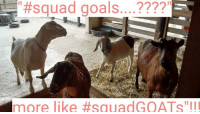 """Ha ha, iI luv internet so much. So many fun """"me-me's"""" and clever """"puns"""". Jus had 2 share.: squad goals  more ike ftsauad GOATS III Ha ha, iI luv internet so much. So many fun """"me-me's"""" and clever """"puns"""". Jus had 2 share."""