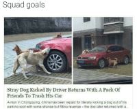Friends, Goals, and Revenge: Squad goals  Stray Dog Kicked By Driver Returns With A Pack Of  Friends To Trash His Car  A man in Chongquing, China has been repaid for literally kicking a dog out of his  parking spot with some strange but fitting revenge the dog later returned with a.