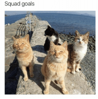 Friends, Funny, and Goals: Squad goals Tag your friends (@hilarious.ted)