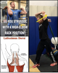If you struggle to get your elbows up into a good position for your front squats & cleans, it may be due to stiffness in your lat muscles (the big darker red muscles shown bottom left) 👆🏼 . One of my favorite band assisted stretches to help mobilize into a good position is the topic of today's post. Grab a band with your palm facing the sky. Twist into the position shown & drive your elbow up as the band helps pull your hand down behind you back. You can also use your opposite free hand to push into a greater stretch (felt in your upper lateral back & the underside of your arm). Hold for 10 seconds & try 5 before re-checking your rack position to see if this is the right mobility tool for your body ✅ . KEYS TO PERFORM CORRECTLY👇🏼 1️⃣Drive your elbows straight forward (don't let it kick out to the side)✅ 2️⃣Keep your core braced (this will keep your back from hyper extending (which I could have done a little better job of in this video)✅ 3️⃣Keep your hand facing the sky. This allows you to mobilize in a position similar to your end goal (improving your front rack) ___________________________________ Squat University is the ultimate guide to realizing the strength to which the body is capable of. The information within these pages are provided to empower you to become a master of your physical body. Through these teachings you will find what is required in order to rid yourself of pain, decrease risk for injury, and improve your strength and athletic performance. ________________________________ Squat SquatUniversity Powerlifting weightlifting crossfit training wod workout gym fit fitfam fitness fitspo oly olympicweightlifting hookgrip mobility USAW physicaltherapy lifting crossfitter: SQUAT  DO YOU STRUGGLE  WITH A HIGH ELBOW  RACK POSITION?  Latissimus Dorsi  Levator  Scapulae  Serratus  Posterior  A  Superior If you struggle to get your elbows up into a good position for your front squats & cleans, it may be due to stiffness in your lat muscles (the big darker red muscles shown bottom left) 👆🏼 . One of my favorite band assisted stretches to help mobilize into a good position is the topic of today's post. Grab a band with your palm facing the sky. Twist into the position shown & drive your elbow up as the band helps pull your hand down behind you back. You can also use your opposite free hand to push into a greater stretch (felt in your upper lateral back & the underside of your arm). Hold for 10 seconds & try 5 before re-checking your rack position to see if this is the right mobility tool for your body ✅ . KEYS TO PERFORM CORRECTLY👇🏼 1️⃣Drive your elbows straight forward (don't let it kick out to the side)✅ 2️⃣Keep your core braced (this will keep your back from hyper extending (which I could have done a little better job of in this video)✅ 3️⃣Keep your hand facing the sky. This allows you to mobilize in a position similar to your end goal (improving your front rack) ___________________________________ Squat University is the ultimate guide to realizing the strength to which the body is capable of. The information within these pages are provided to empower you to become a master of your physical body. Through these teachings you will find what is required in order to rid yourself of pain, decrease risk for injury, and improve your strength and athletic performance. ________________________________ Squat SquatUniversity Powerlifting weightlifting crossfit training wod workout gym fit fitfam fitness fitspo oly olympicweightlifting hookgrip mobility USAW physicaltherapy lifting crossfitter