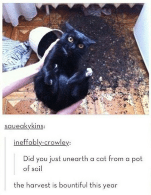 Cat, Soil, and Did: squeakykins  ineffably-crowley:  Did you just unearth a cat from a pot  of soil  the harvest is bountiful this year The harvest