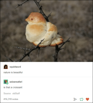 Beautiful, Nature, and Bread: squidwurd  nature is beautiful  azizansafari  is that a croissant  Source: old5tuff  416,318 notes and here we see the rare bread bird in its natural habitat