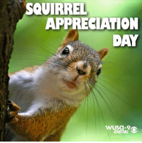 Happy Squirrel Appreciation Day!: SQUIRREL  APPRECIATION  DAY  WUsa 9  DIGITAL Happy Squirrel Appreciation Day!