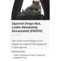 Memes, The Worst, and Squirrel: Squirrel Drops Nut,  Looks Absolutely  Devastated (PHOTO)  Oct 25, 2013  One of the worst things to ever  happen to a squirrel has happened  to this squirrel.  massacre chips:  I think l laughed so hard l woke my  neighbours up what's your favorite animal?? ~ im stuck between cats and dogs (stereotypical, I know)