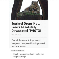 Tumblr, Squirrel, and Chip: Squirrel Drops Nut,  Looks Absolutely  Devastated (PHOTO)  Oct 25, 2013  One of the worst things to ever  happen to a squirrel has happened  to this squirrel  massacre chips:  I think laughed so hard I woke my  neighbours up I started watching a show called West World and I'm so fascinated by it! I'm on the 3rd episode and it's pretty gripping so far 😅
