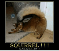 Memes, Squirrel, and 🤖: SQUIRREL !  No, wait, My Bad CAT 111