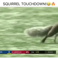Memes, Run, and Squirrel: SQUIRREL TOUCHDOWN!ea  ATE  0 19 LOUISVILLE 21 2nd 4:08  3rd & 6 That guy can run!! 😂 Drop a like!