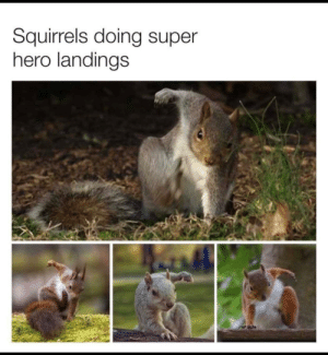 Here to save us all: Squirrels doing super  hero landings Here to save us all