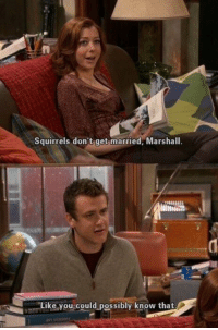 Memes, 🤖, and Marshall: Squirrels don't get married, Marshall.  Like vou could possibly know that Marshall has a point https://t.co/qWZJYCm3Ew