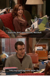 Memes, 🤖, and Marshall: Squirrels don't get married, Marshall.  Like you could possibly know that Marshall has a point https://t.co/Wk6JMiEsUU