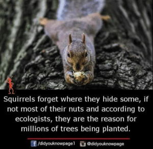 Memes, Trees, and Reason: Squirrels forget where they hide some, if  not most of their nuts and according to  ecologists, they are the reason for  millions of trees being planted  f/didyouknowpagel@didyouknowpage