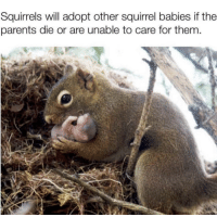 Parents, Squirrel, and Wholesome: Squirrels will adopt other squirrel babies if the  parents die or are unable to care for them Just some wholesome parenting right here.