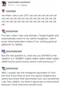 """Animals, Bunnies, and Cute: squishable-amethyst  peri--dox Follow  cummied  me when i see a cat: CAT! cat cat cat cat cat cat cat  cat cat cat cat cat cat cat cat cat cat cat cat cat cat  cat cat cat cat cat cat cat cat cat cat cat cat cat cat  cat  lurknomoar  Fun fact: when I see cute animals, I forget English and  automatically revert to my native Hungarian. I don't  know what bystanders make of me, reciting guttural  gibberish to rabbits  quizzicalqueek  But the real question is, what are you SAYING to the  rabbits? Is it 'RABBIT! rabbit rabbit rabbit rabbit rabbit  rabbit bunny bunny bunny awww cute bunnyyyyy'?  lurknomoar  Well, I usually say the Hungarian equivalent of 'bun  bun bun lil bun look at your tiny spoon-shaped ears  awww bun brave little lawnmower bun' but sometimes  I say 'hey rabbits, my sister's gonna go to med school  because I think evervone should know <p>Tumblr User Loves Bunnies and His Sister via /r/wholesomememes <a href=""""http://ift.tt/2rfThoD"""">http://ift.tt/2rfThoD</a></p>"""