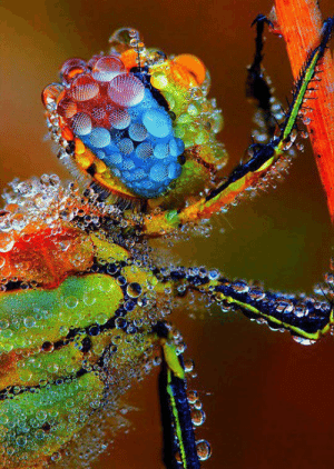 srsfunny:Dragonfly Coated In Morning Dew: srsfunny:Dragonfly Coated In Morning Dew