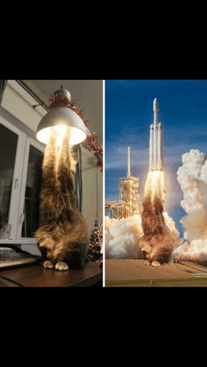 Tumblr, Blog, and Http: srsfunny:  ROCKET CAT