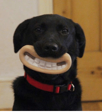 Tumblr, Blog, and Http: srsfunny:The Greatest Chew Toy Of All Time
