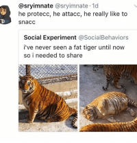 Memes, Butterfly, and Tiger: @sryimnate @sryimnate 1d  he protecc, he attacc, he really like to  snacc  Social Experiment @SocialBehaviors  i've never seen a fat tiger until now  so i needed to share Follow my other accounts @antisocialtv @lola_the_ladypug @x__antisocial_butterfly__x