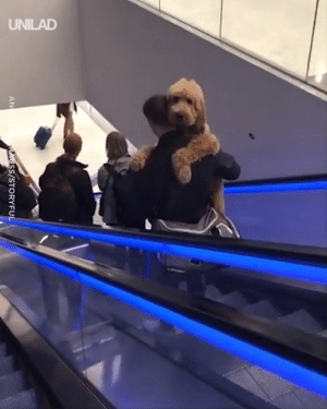 "Dank, Quite, and 🤖: SS/STORYFU  AN ""This big softie hasn't quite got the hang of escalators yet..."" 😫😍"