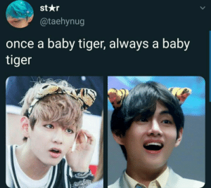 Tiger, Baby, and Once: st*r  @taehynug  once a baby tiger, always a baby  tiger