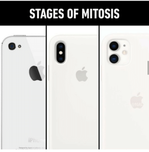 CELL phone: STAGES OF MITOSIS  @9GAG  iPhone  Designed by Apple in Califomia A CELL phone