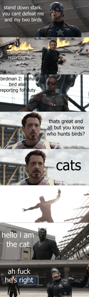 Birdman, Cats, and Hello: stand down stark.  you cant defeat me  and my two birds  rdman l  reporting for   birdman 2: alpha  bird als  reporting for duty  thats great and  all but you know  who hunts birds?   cats   hello i am.  the cat  ah fuck  he's right  thewintersoldiersbutt.tumblr.conm thewintersoldiersbutt:just thinking about how this scene went down in civil war