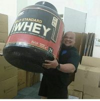 Memes, Bodybuilding, and 🤖: STANDARD  WHEY  TE PRIMARY SOURCE Gainz all day @bodybuilding