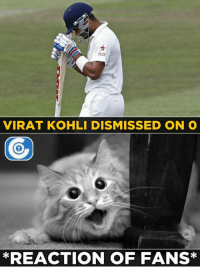 Duck for Virat Kohli.: Star  VIRAT KOHLI DISMISSED ON O  *REACTION OF FANS Duck for Virat Kohli.