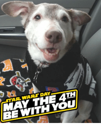 MAY THE FOURTH BE WITH YOU! Happy Star Wars Day!  Are you pet's into Star Wars too? Share a picture with us!: STAR WARS DAY  MAY THE 4TH  BE WITH YOU MAY THE FOURTH BE WITH YOU! Happy Star Wars Day!  Are you pet's into Star Wars too? Share a picture with us!